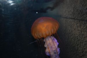 Hello... Jellyfish by invisibleperson0o
