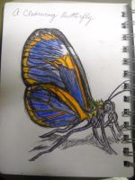 A Clearwing Butterfly by InsanePaintStripes