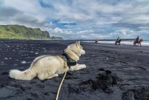 Chillout in Vik by PatiMakowska