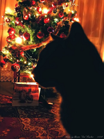 Merry Christmas, Mr Cat by Lady-CaT