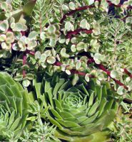 Succulents 8.08 by Artsee1