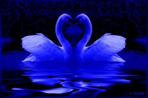Blue_Swans by Escara40