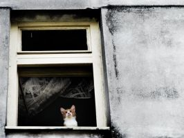 Cat at the window by MarinStefan