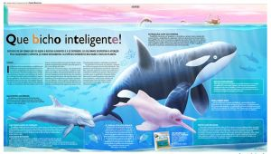 Dolphins Pages by marchine