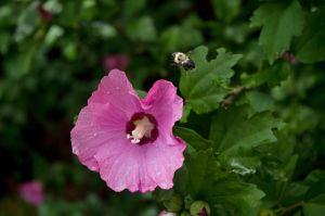2015-07-03 Nature 60 by skydancer-stock