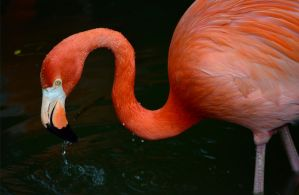 Flamingo 2 by PSauburnchick12