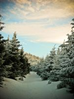 winterpath by wilda23