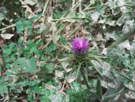 Thistle by ShadowGyrlBrice