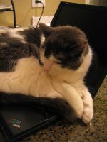 Adobe Laptop 3 by cat-lovers