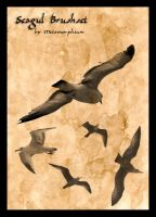 Wonderful Seaguls by Metamorphium