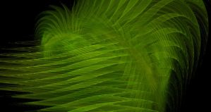 Ferns by songsforever