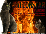 Falconstar of Ashclan by Tracie-is-a-wolf
