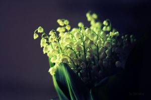 lily of the valley by tigrri