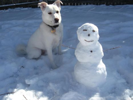 Midget snowman or GIANT dog? by puppyqueen14