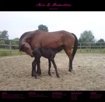 Horse stock 30 - Friesian by MiszD