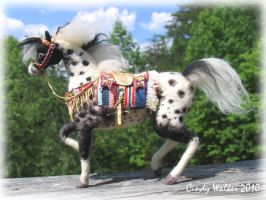 Appaloosa Indian pony by Ghost-Horse