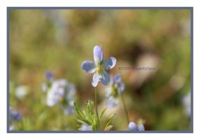 Wild Violets by SassyPants61762