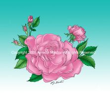 PINK ROSES for pageviews by AmedaN