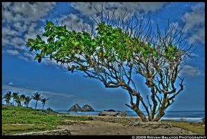 HDR - Tree of Life by rbaluyos