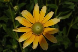 Stock 486 - Yellow Flower by pink-stock