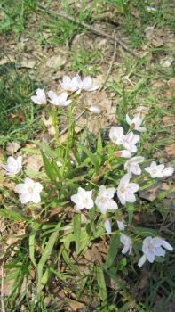 Tiny White Flowers by SangheiliAine