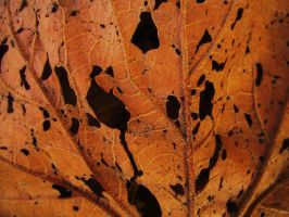 Faces in the Leaves by jassele