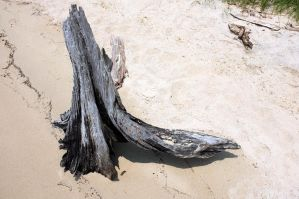 Driftwood 2 by rdswords