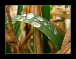 Droplets 14 by mordoc