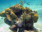 Coral Head - Goulding Cay by Lauren-Lee