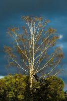 Tree two by menca