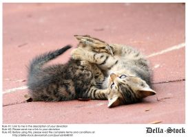 Playing Kittens.2 by Della-Stock