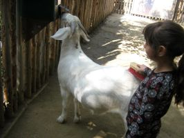 Aubri and Goat by my-dog-corky