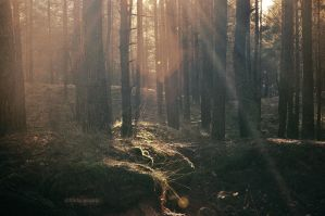 magic sunlight by LindaMarieAnson