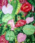 Assorted Anthuriums by joeyartist