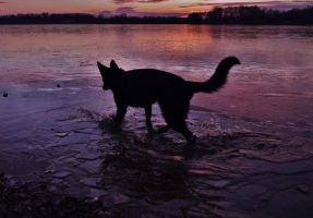 Dog discover ice by Silthia