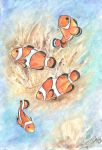 Clownfishes by IllusoryLove