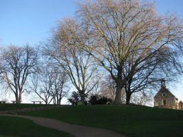 trees and a church 6658 by Maxine190889