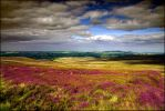 The sweet glow of moorland heather by LordLJCornellPhotos