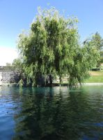 Weeping Willow by ShipperTrish