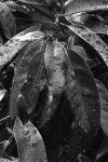 Leaves by noly013