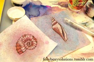 Seashell and Ammonite Drawings by foxyboxysolutions