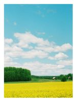 yellow, green and blue by Myana