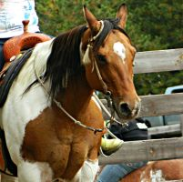 Dun Tobiano Paint Horse by EquineGhost