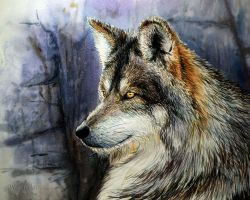 Wolf by OCMay