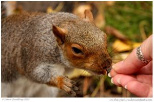 Dont Feed the Squirrels by In-the-picture