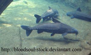 Fishes 03 by Bloodsoul-Stock