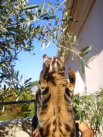 My cat grabbing an olive by TheMadSoldier
