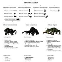 Cladogram of Matrican Animals by Thethicrad