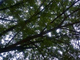 The Trees and Me - Garden - 2012-36 by Kay-March