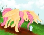 Fluttershy and Angel by La-gato-negro